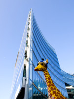 Big City Giraffe