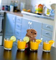 Smoothie Bear